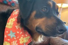 Amy-Graces-dog-Dixie